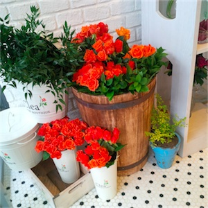 orange roses in woo drum-thumb